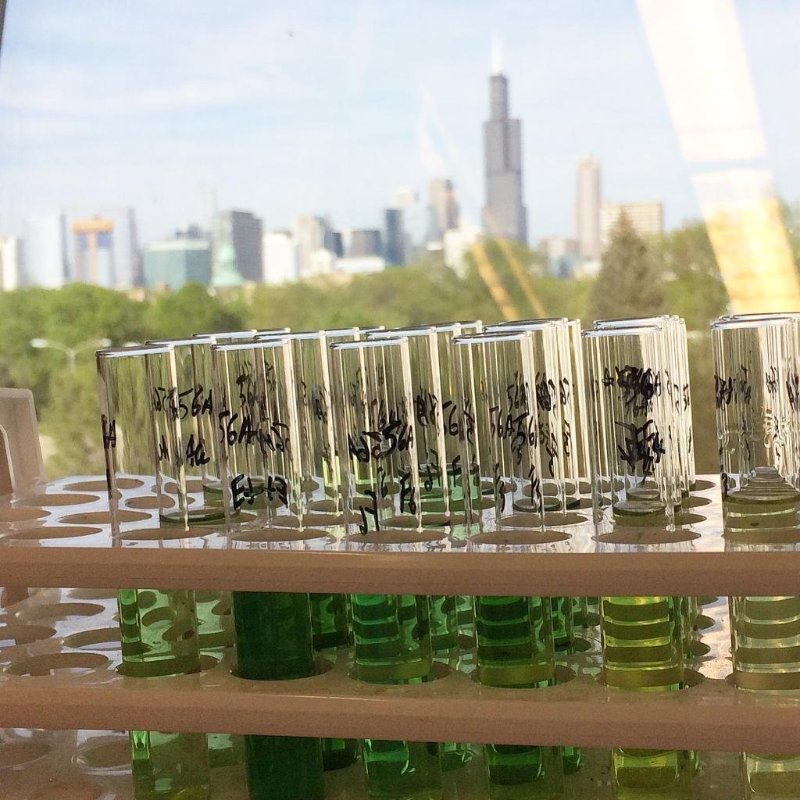 Chicago cannabis lab