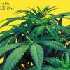 cannabis consultant in connecticut