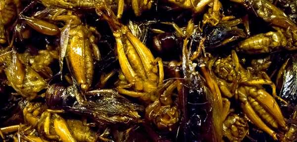Insectos fritos