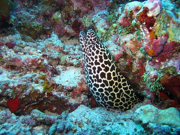 Fondo marino en las Maldivas