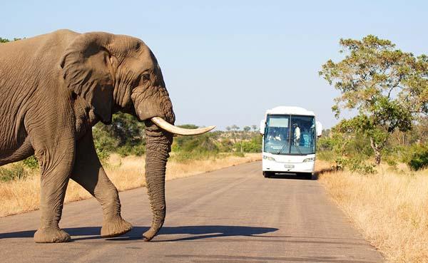 elefante-kruger-quehoteles