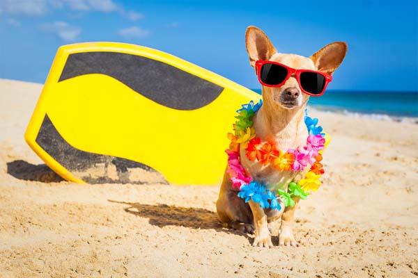 perro-surfero-quehoteles