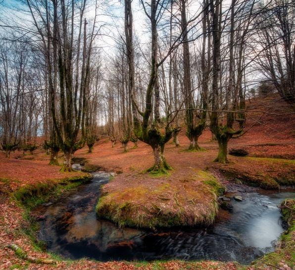 Bosque de Otzarreta en Gorbea