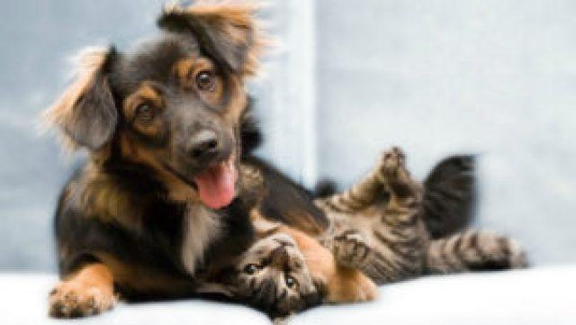 funny-cat-dog-friendship_5