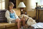 5 filmů o psech, které stojí za to