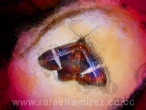 Mariposa. Fotografía Rafael Ramírez (2008)