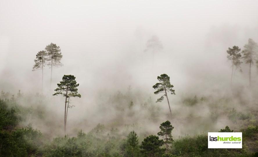 Bosque mágico foto Carlos Criado