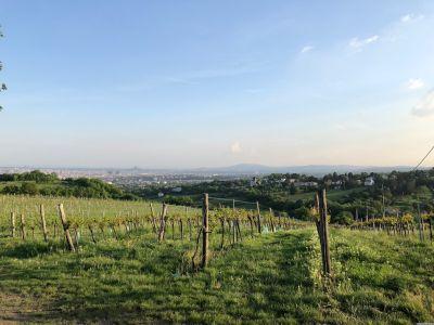 Im Vordergrund die Weingärten am Nussberg, dahinter liegt Wien.