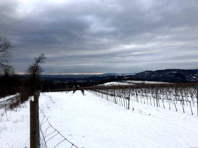 Aussicht auf Wien über einen Weingarten