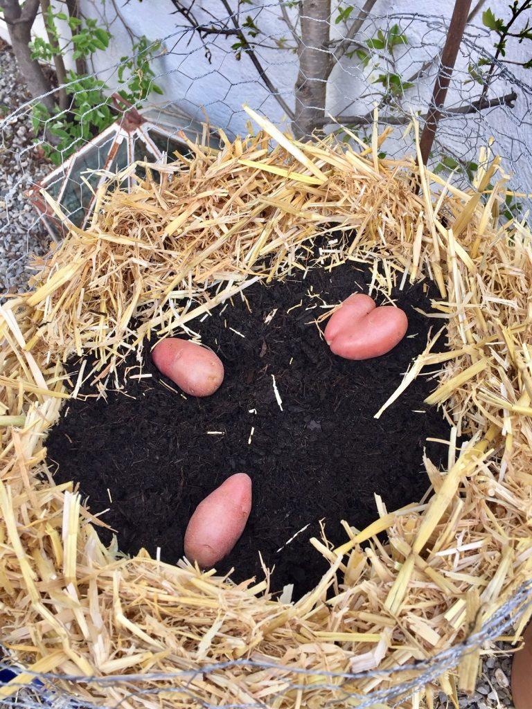 kartoffeln verschiedene sorten im turm