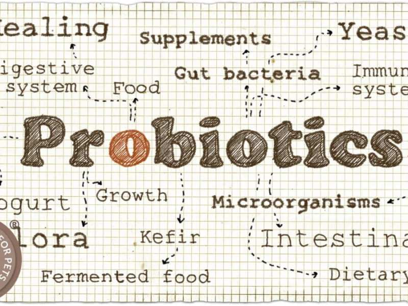 Probiotics for your Mutts Pups Nobles and Masters