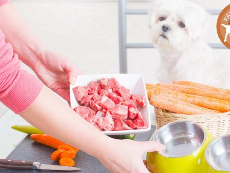 Raw and Real Food for Cats and Dogs