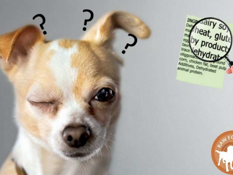 Reading Pet Feed Labels