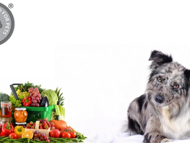 Vegan Diets for Dogs