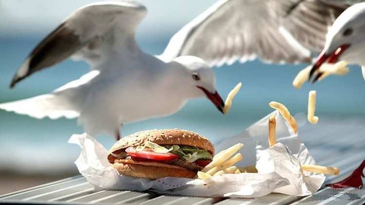 Fast Food Open Around Me