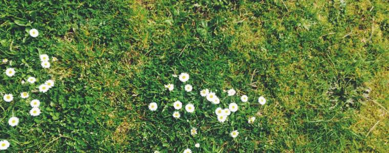close up of uneven ground with white flowers