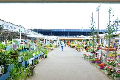 ジョイフル本田 千葉ニュータウン ガーデンセンター屋外