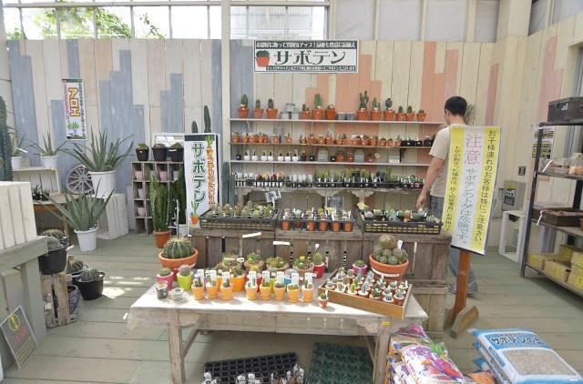 ジョイフル本田瑞穂店 ガーデンセンター サボテンコーナー