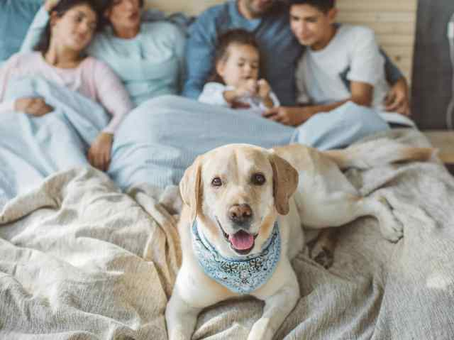 Family of five cuddled up in bed with dog at forefront.
