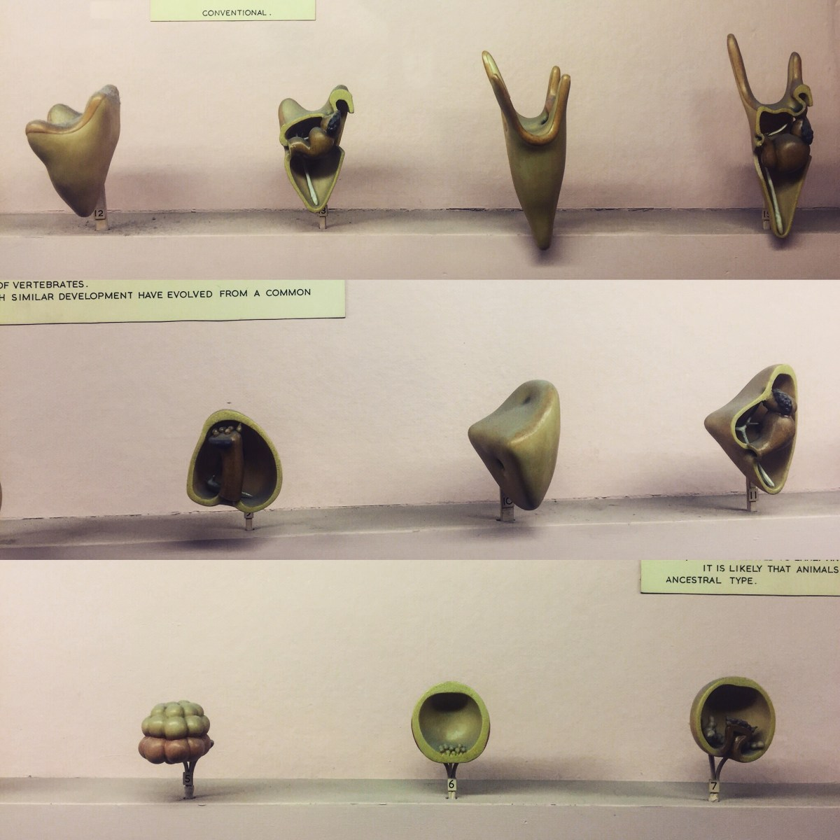 Embryology, Horniman Museum, London
