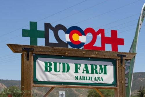 The Bud Farm in Mancos Colorado