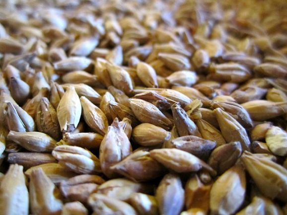 Malt and grain, detail of individual sprouted malt