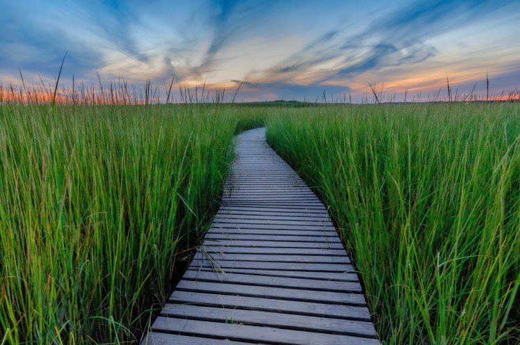 Boardwalk and marshes - Wellfleet Bay