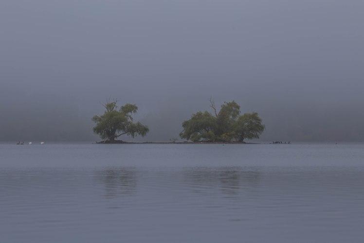 Fog at Horn Pond
