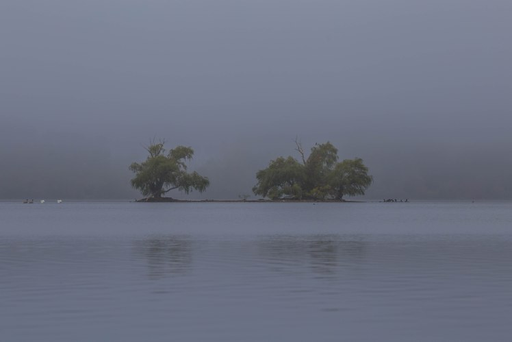 Fog at Horn Pond