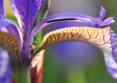 Macro Photography, Flower Pictures