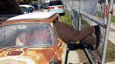 Subaru_1970_360_Pic_1020