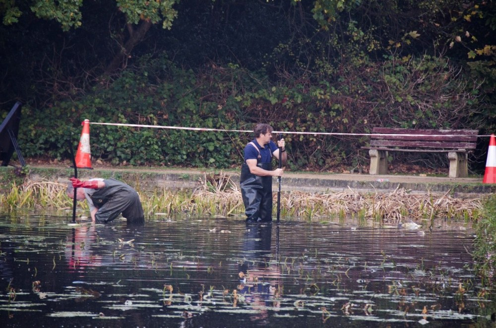 Pond clearing at Froebel