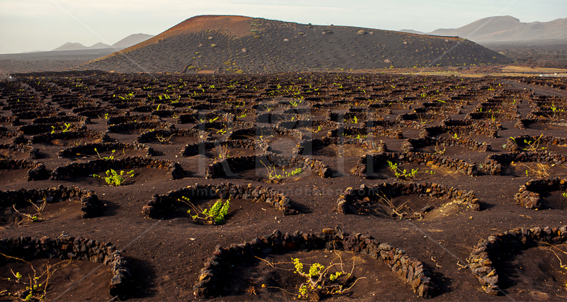 5 vineyards Lanzarote, Canary Islands