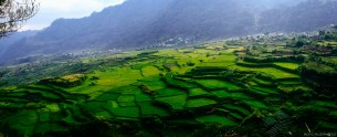 Rice terraces on the way to the caves