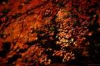 Naejangsan Autumn-4