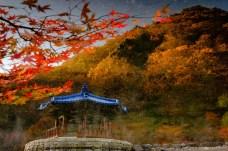 Naejangsan Autumn B-4