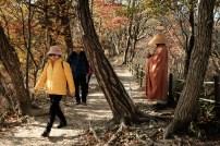 Naejangsan Autumn B-9