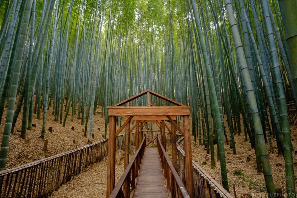 Boseong - Bamboo Forest-1