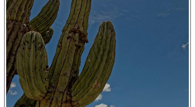 VIVA MeXico – Baja California in the heat