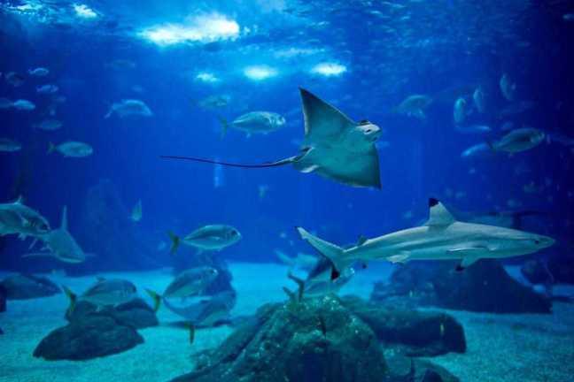 Oceanarium_of_Lisbon__Oceanario_de_Lisboa_-Lisbon-Portugal-c636a3335d464f8c8f4c011bc13495ed_c
