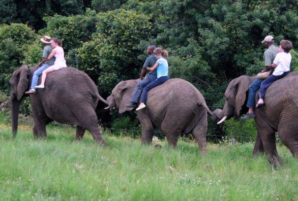 Interact with Elephants