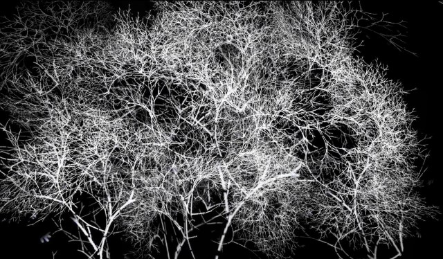"Video still from ""Arboreal"" Rohini Devasher, 2011"