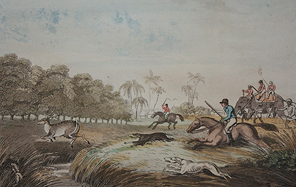 Hunting a Hog-Deer, Williamson Thomas & Samuel Howitt. Image Credit: https://www.saffronart.com/TheStory/ItemV2.aspx?iid=35292