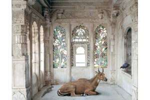 A Place Like Amravati, Udaipur City Palace (Nilgai), Udaipur