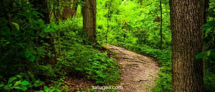 passeggiare immersi nel verde