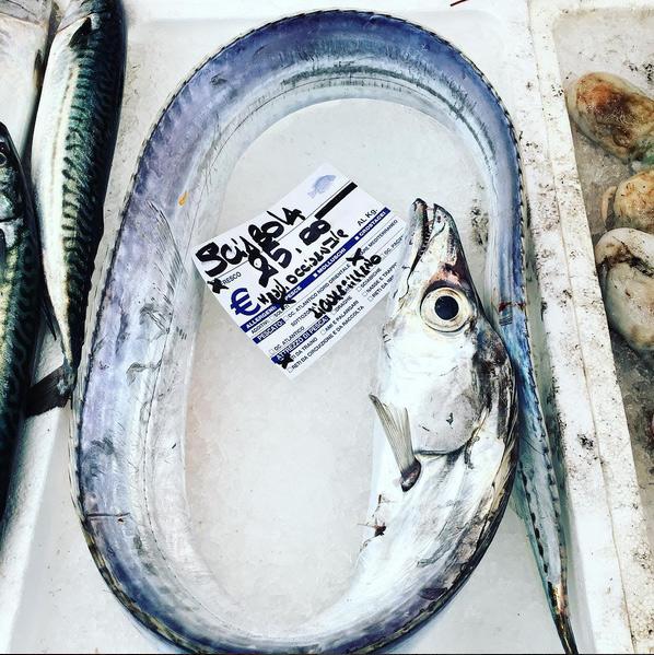 pesce lama | ©foto Sandra Longinotti