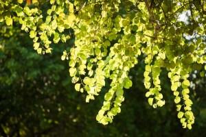 Sansiri Tree Story