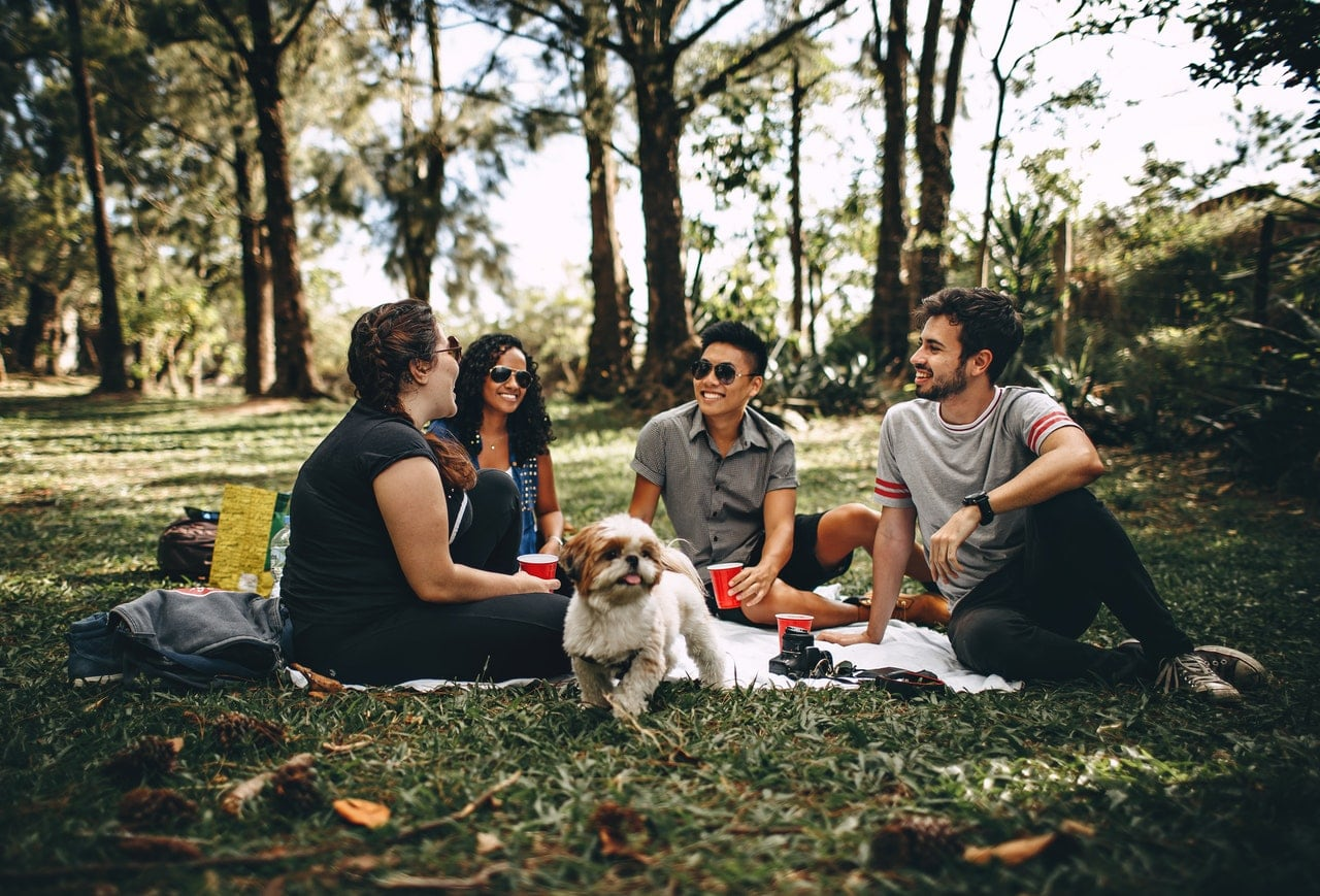 Four friends and a small dog enjoying a picnic in the park.