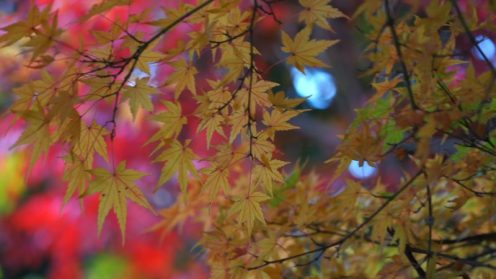 来宮神社-紅葉-