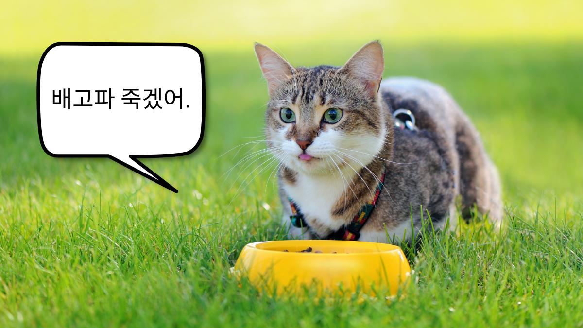 快餓死了示意圖小貓